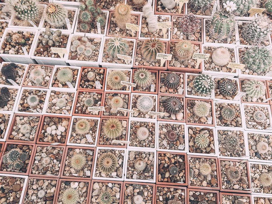 Prickle Emporium - Cacti Collection