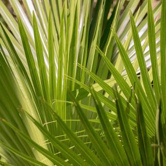 Palm over Palm. Australia.