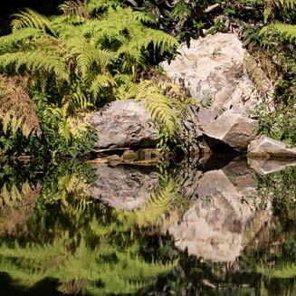 Reflection. Australia.