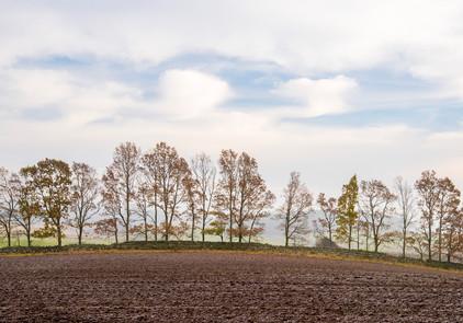 Hallington Tree-Line.jpg