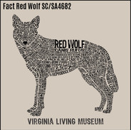 6 Fact Red Wolf sc4682 sa4682.jpg