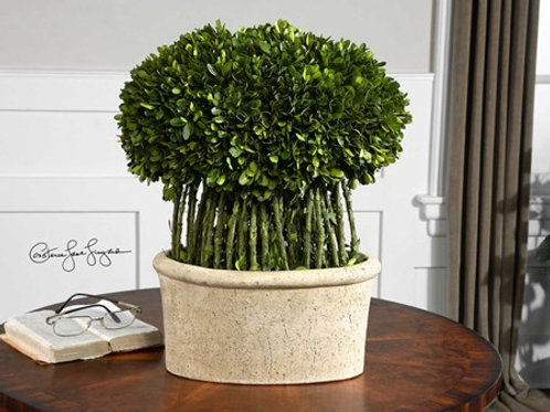 Uttermost PRESERVED BOXWOOD WILLOW TOPIARY #60108