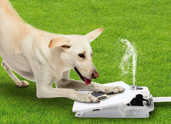 Dog Step Water Fountain