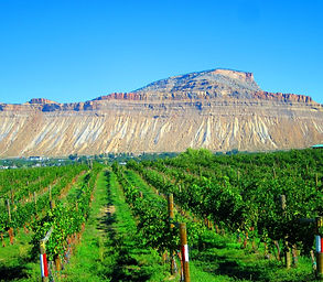 palisade-wine-country-by-lisa-levy-kral.
