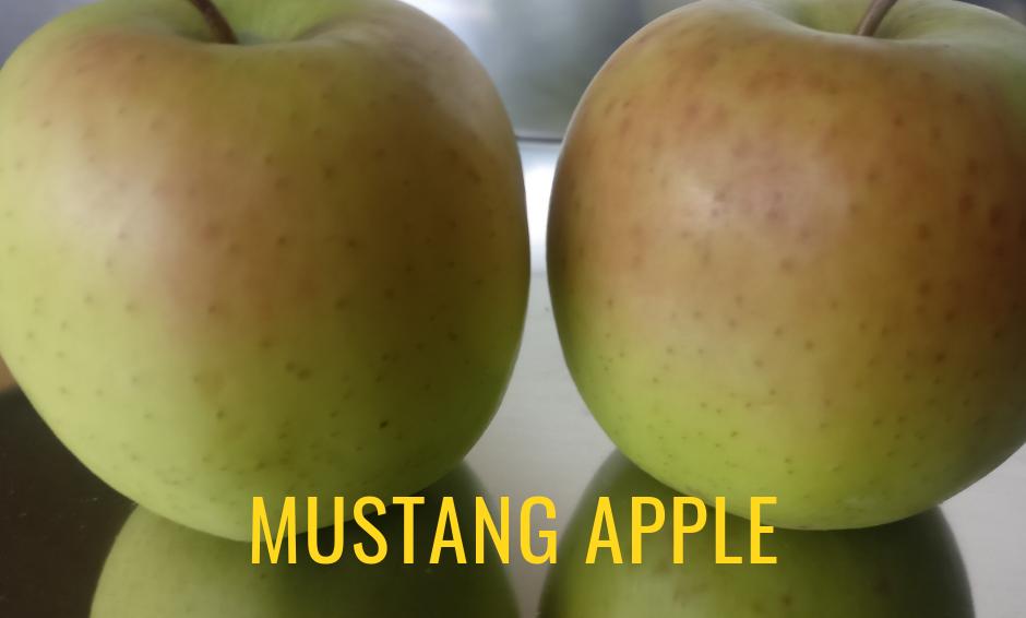 Golden Mustang Apple - 2 kgs