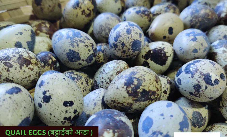 Quail Egg - 20pcs