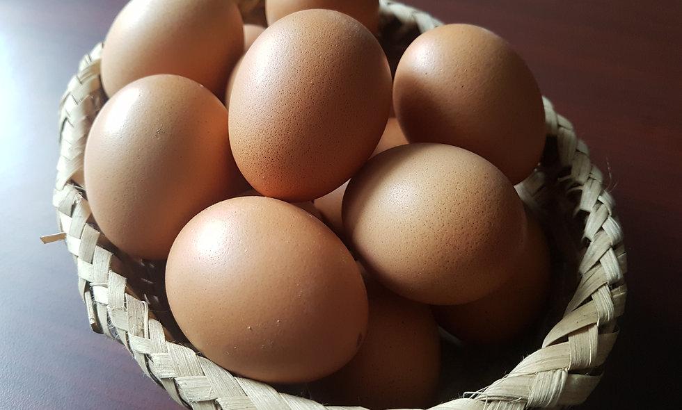 Sunaulo Egg - 15pcs