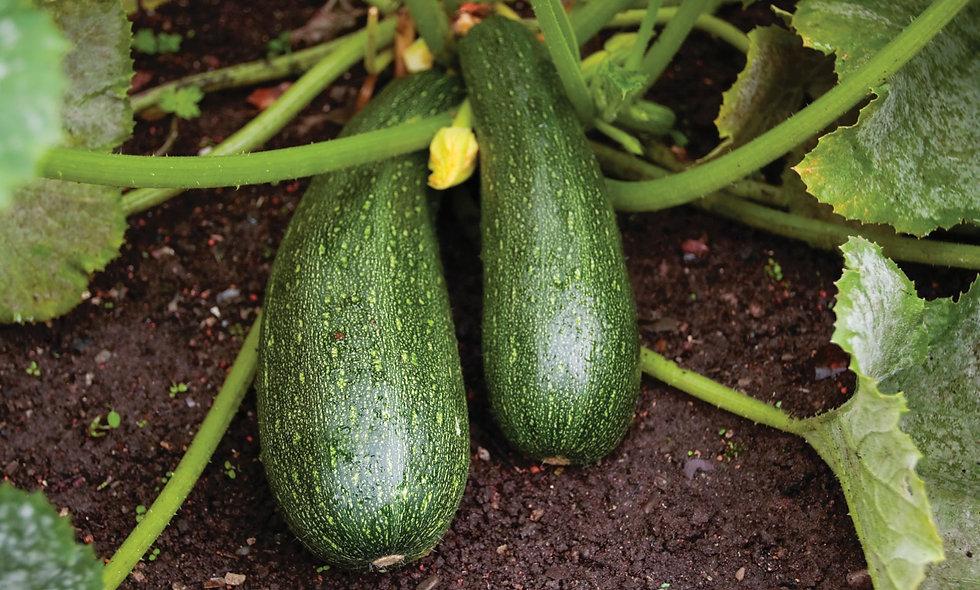 Zucchini - 1kg