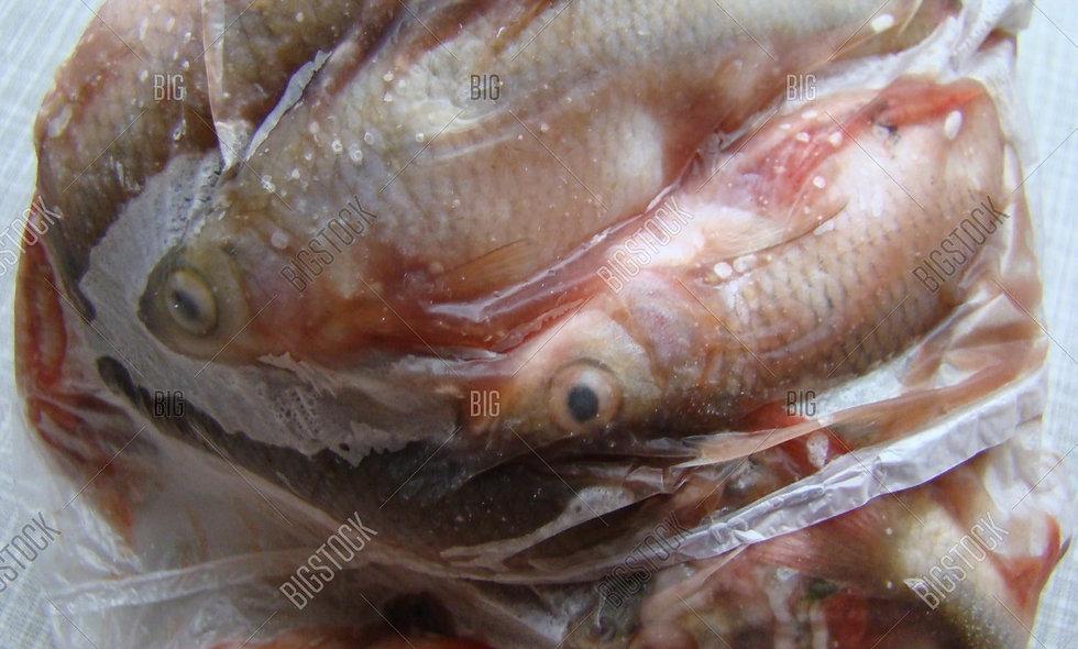 Frozen - Carp Fish - 1kg