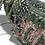 Thumbnail: Stylish Chanel Cruise Bag Collection