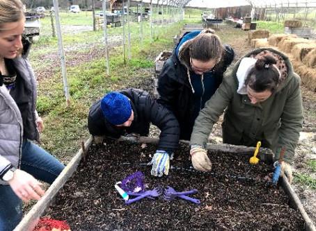Reprise des ateliers jardinage avec les Papillons Blancs
