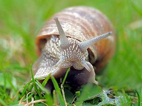 snail-1502214_1920.jpg