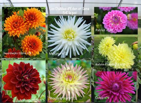 Vente de Dahlia et autres plants