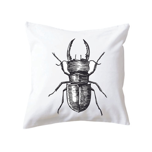 Cushion Beetle Three