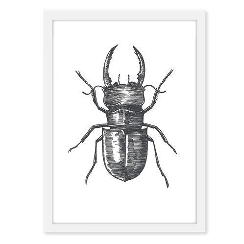 Beetle three