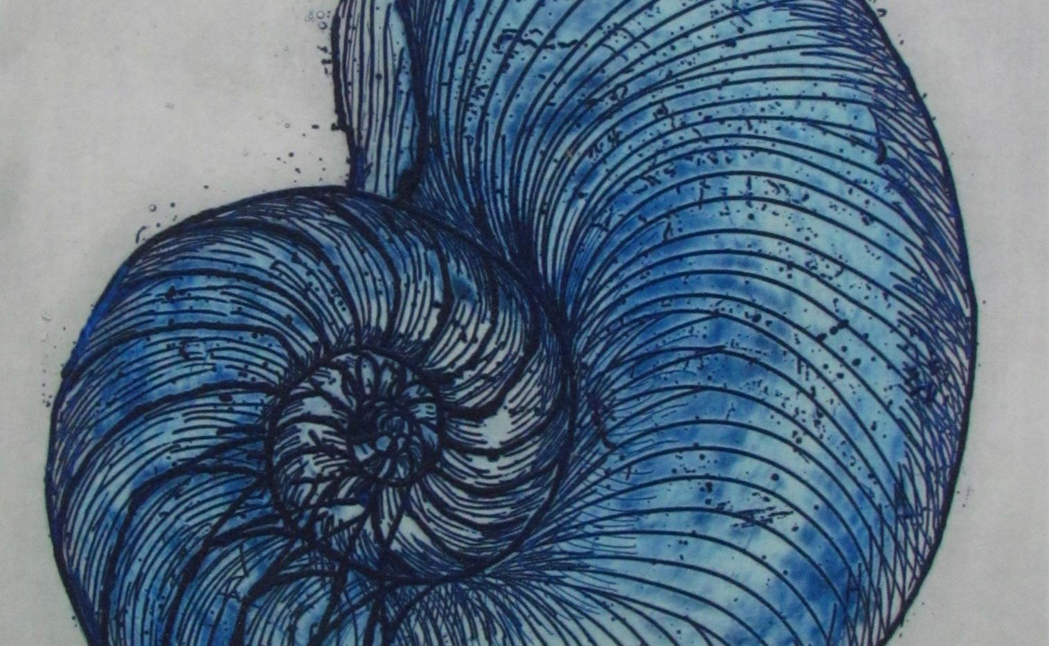 Blue Nautilus