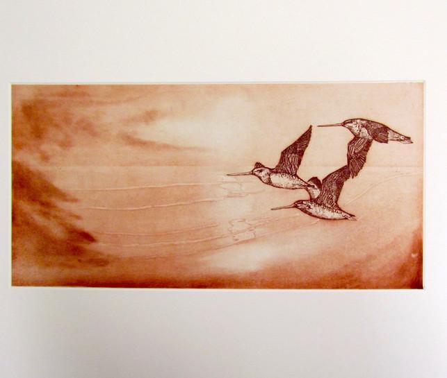 Flight of the Bar-tailed Godwit.jpg