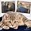Thumbnail: Magnetic Dog/Cat Mat Paw