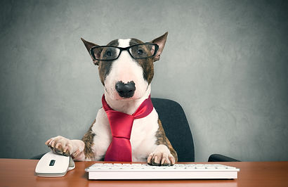 Business dog using his computer.jpg