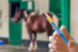 Hand of veterinarian holds syringe. Hors