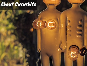What the Pharmaceutical Industry Doesn't Want You to Know About the Cucurbitaceae Family.