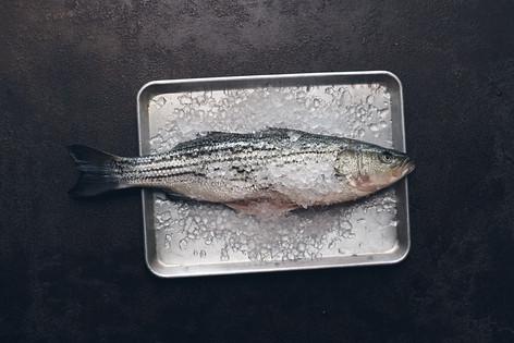 Alex Branch   Fish   Food Photography   © Studio Caribe