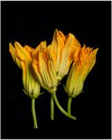Flor de Calabaza   Food Photography   © Studio Caribe