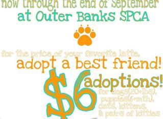 September Adoption PROMO
