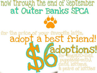 September Adoption PROMO