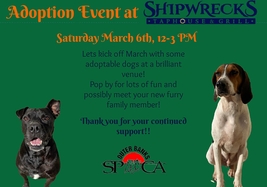 Adoption Event at ShipWrecks Taphouse &
