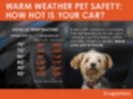 Mockup-Dog-in-Car_v10.png