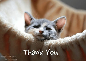 thank you cat.jpg