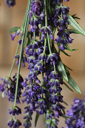 lavender bouquet hanging