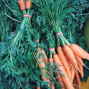 Hearty Roots Farm Carrots