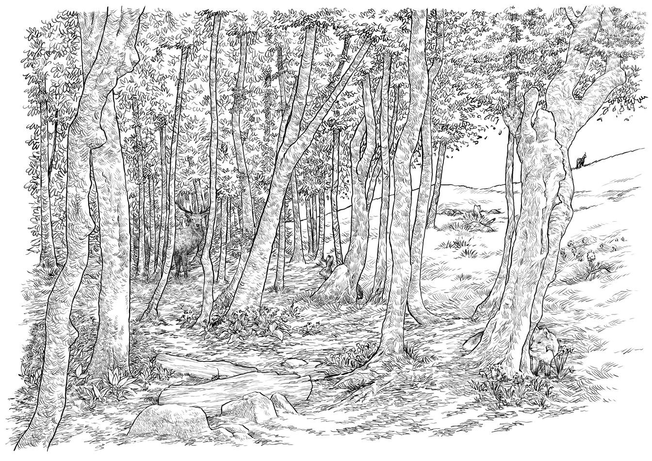 Illustration jeu - Forêt