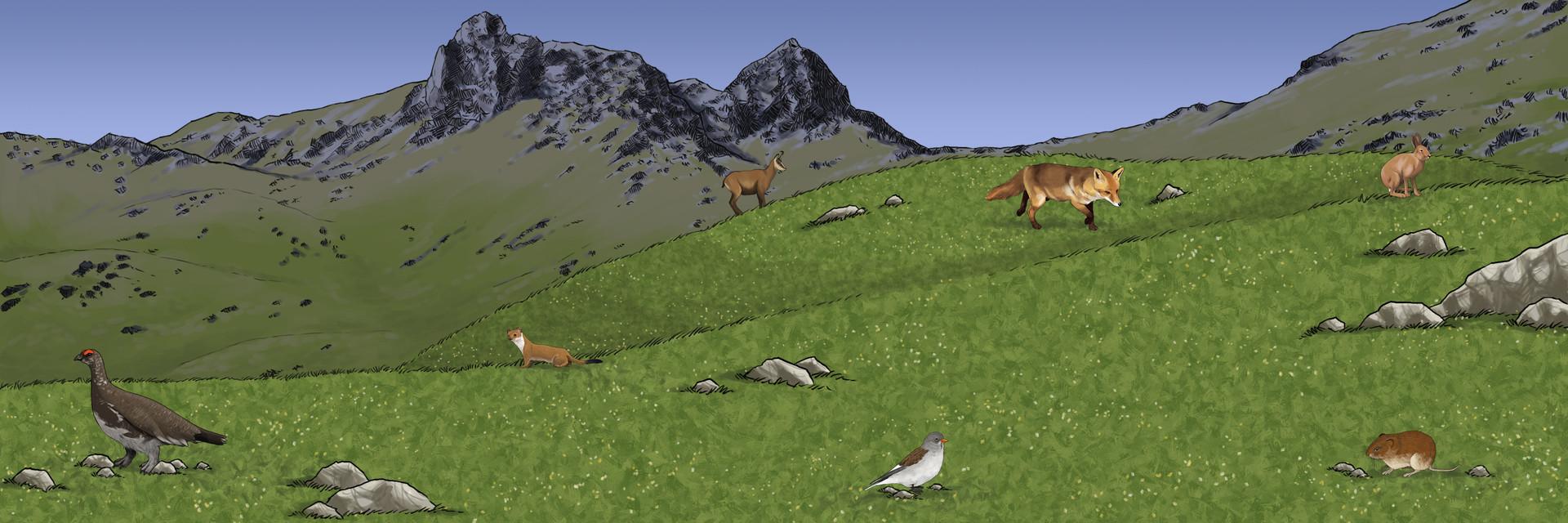 Paysage - Alpage Pri