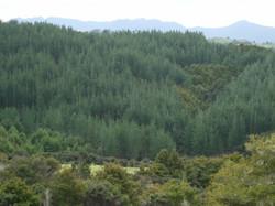 Mature Carbon Forest