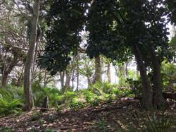 NZ Native Forest Preservation