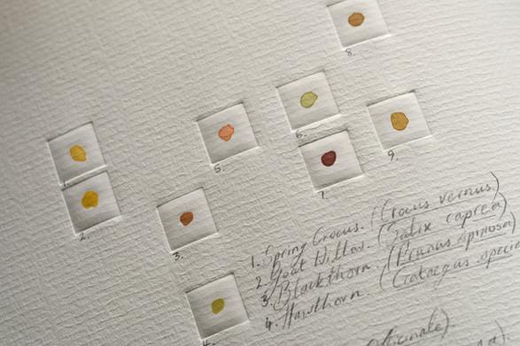 Detail from Melissographia by Amy Shelton & John Burnside - Spring pollen dots