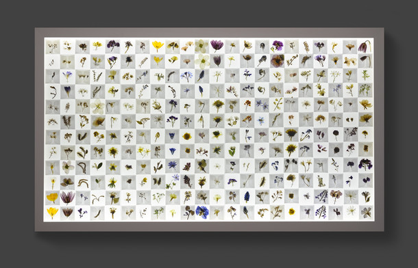 Florilegium: Honey Flow: I [spring] (2014) by Amy Shelton (Wellcome Collection).