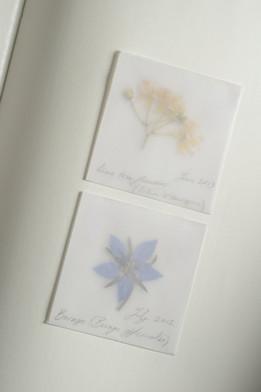 Detail from Melissographia by Amy Shelton & John Burnside -  Lime borage