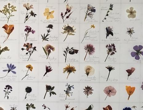 Anthology: Moretonhampstead Herbarium by Amy Shelton (2019)