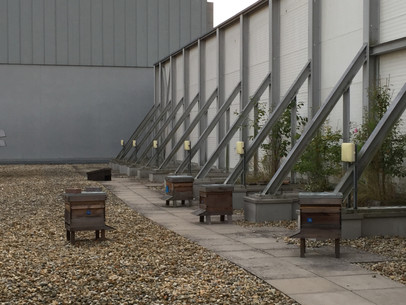 The Princesshay City Bee Project rooftop garden and apiary