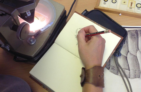 Honeyscribe and Felicity Henderson from University of Exeter running drawing workshops and rare books handling sessions at Exeter Cathedral Library & Archives 2016