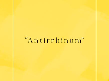 """""""Antirrhinum"""""""