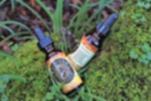 We Bee Kind CBD Herbal Pet Tincture- 500
