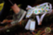 QueenBee-3.jpg