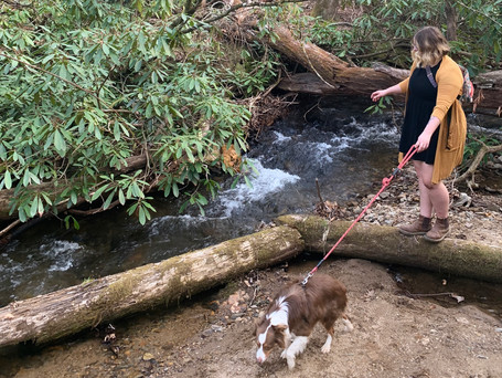 Bent Creek Trails in South Asheville