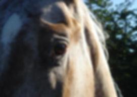 One-eyed Endo