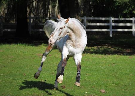 Endo Pasture Play